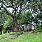 The Grassy Knoll by Colleen Drew