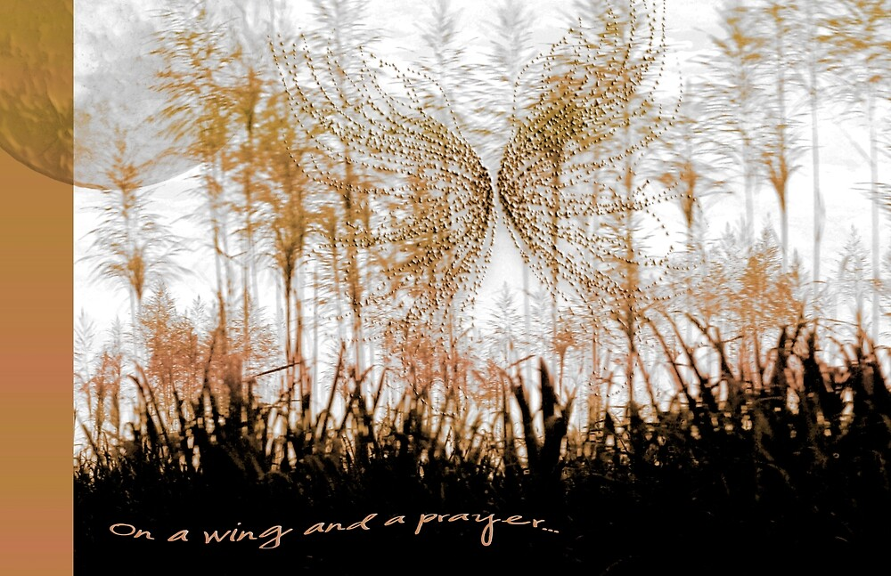 On a wing and a prayer... by Holly Kempe