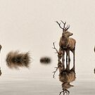 Deer on the Water by fr3spirit7