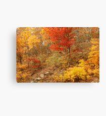 Colors Of Autumn, Shenandoah Canvas Print