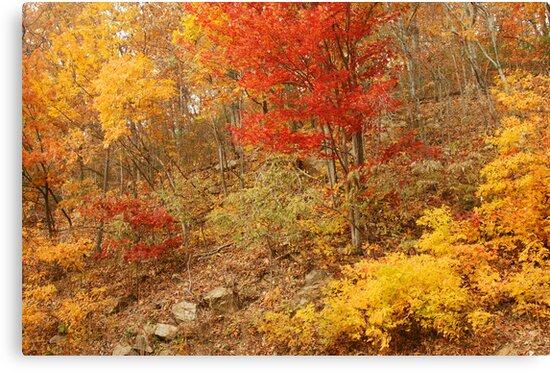 Colors Of Autumn, Shenandoah by Stephen Vecchiotti