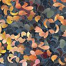 A Shiny Path (2) by angelo cerantola