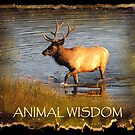 ANIMAL WISDOM by Jan Landers