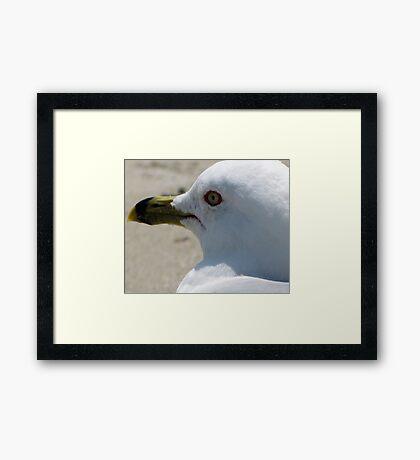 Gull 2 Framed Print
