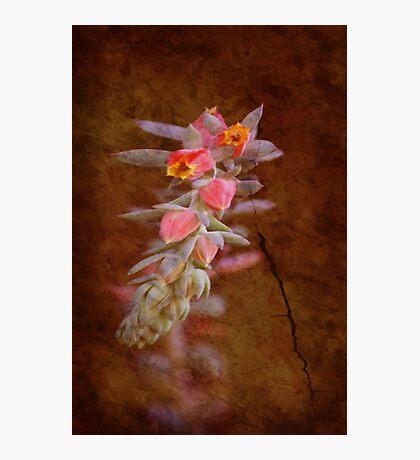 Regrowth Photographic Print