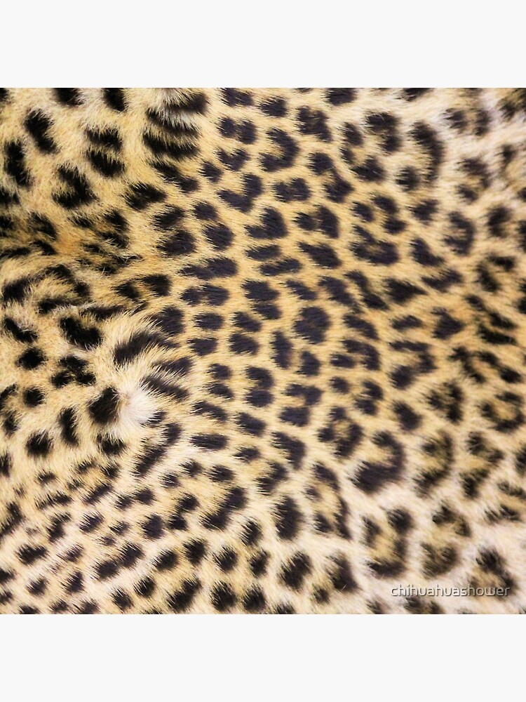 Leopard print by chihuahuashower