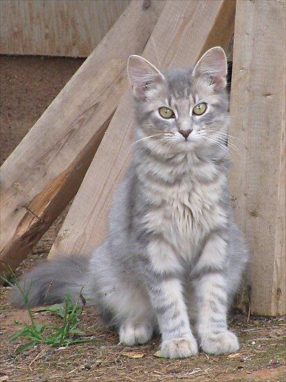 Here Kitty Kitty by Ginny York