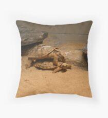 Mating Seaon Throw Pillow