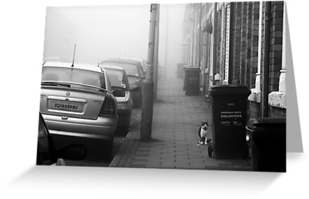 Foggy Morning on Collection Day by SquarePeg