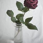 Single rose by Julia Pärnänen