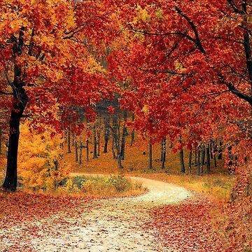 Autumn Trail by DesignsAndStuff