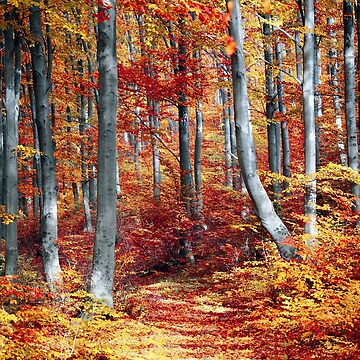 Fall Forest by DesignsAndStuff