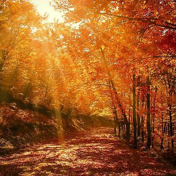 Autumn Light by DesignsAndStuff