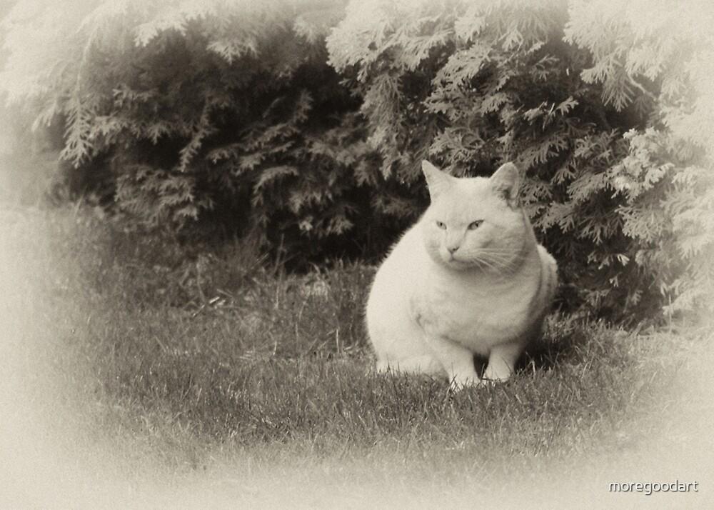 White Cat in my dream by moregoodart
