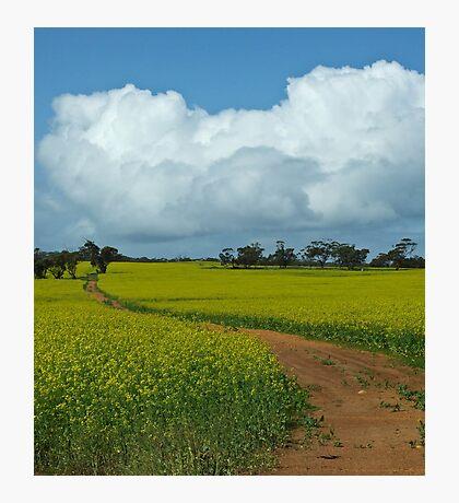 The Track - near Northam, Western Australia Photographic Print