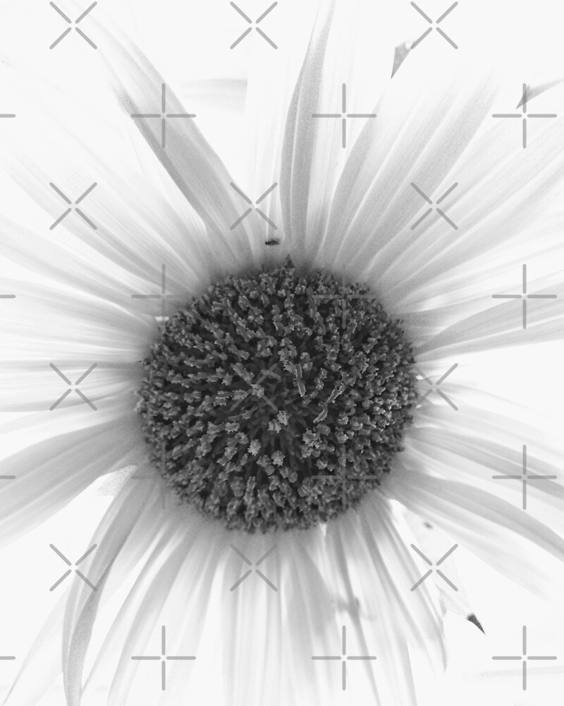 Black and White Sunflower by saggiemick