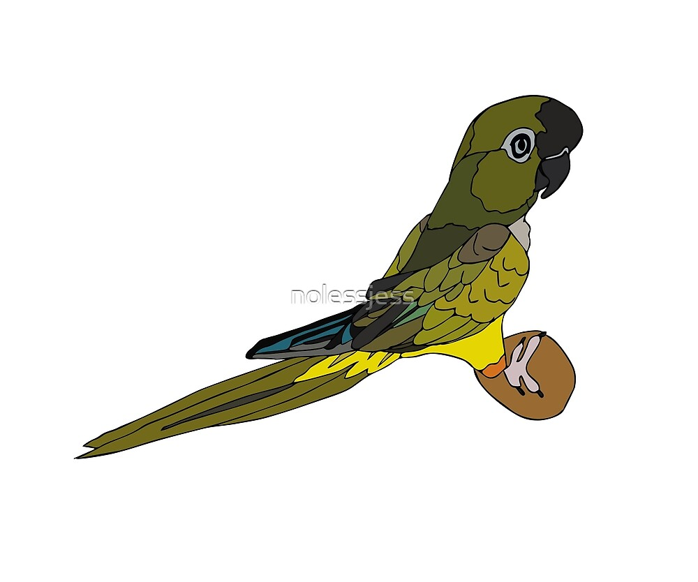 Patagonian Conure by nolessjess