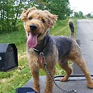I am waiting on mail by Tucker The Dog