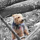 There is a squirrel in here somewhere! by Tucker The Dog