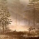22.5.2015: Pine Trees, Spring Morning II by Petri Volanen