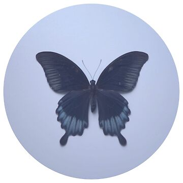 CL - Butterfly - Blue by Medelin
