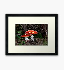 Amanita Muscaria, poisonous mushroom. Pine forest background Framed Print