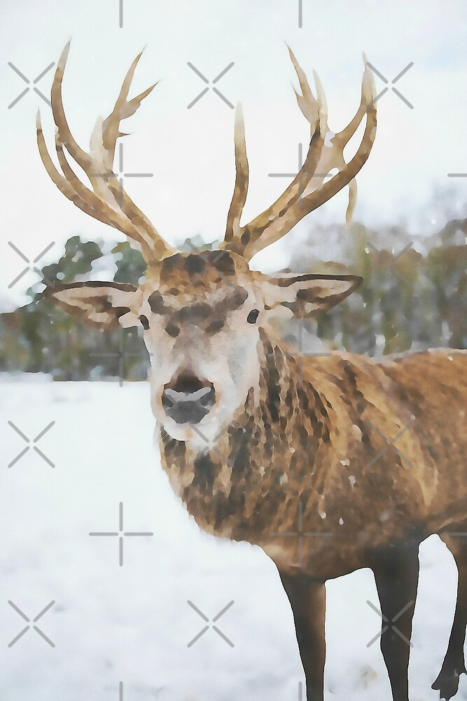 Moose in Winter Snow by nthdesign