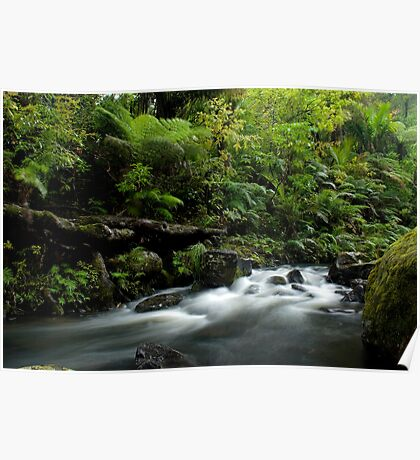 Small stream in the Waipoua Forest Poster