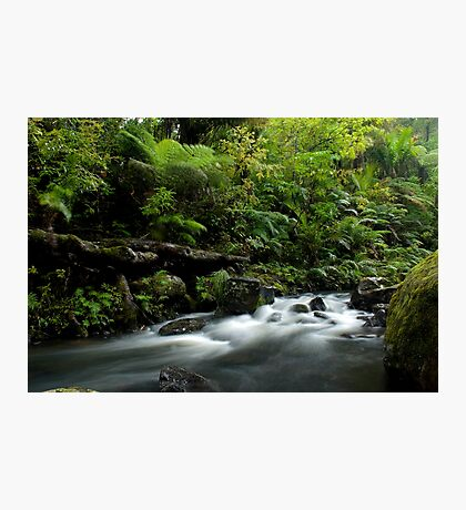 Small stream in the Waipoua Forest Photographic Print