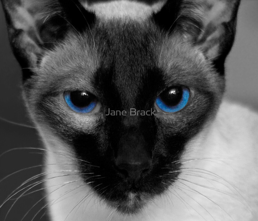 Baby's Got Blue Eyes by Jane Brack