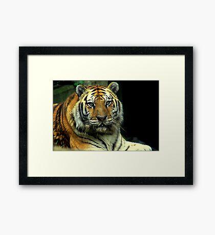 Big Cat Framed Print