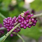 Bursting In Purple by Dana Yoachum