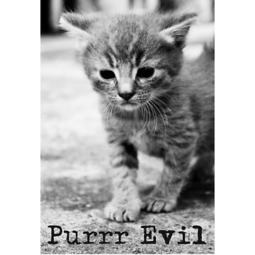 Purr Evil, hilarious little grumpy kitten, funny t-shirt by byzmo