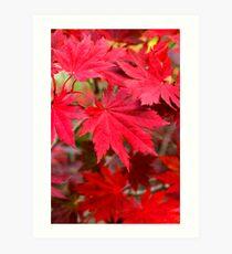 Korean Maple Leaves - Seoraksan National Park, South Korea Art Print