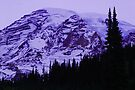 Lavender Twilight at Mt. Rainier by Tori Snow