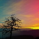 Old tree and colorful sundown panorama | landscape photography by Patrick Jobst
