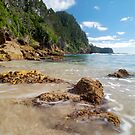 Coromandel Coastline by Paul Mercer