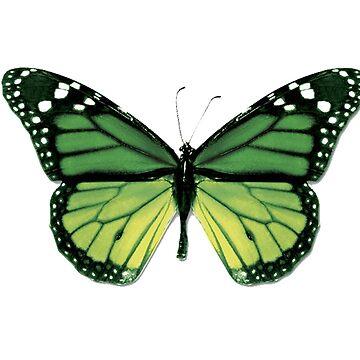 Green Butterfly by MAMMAJAMMA