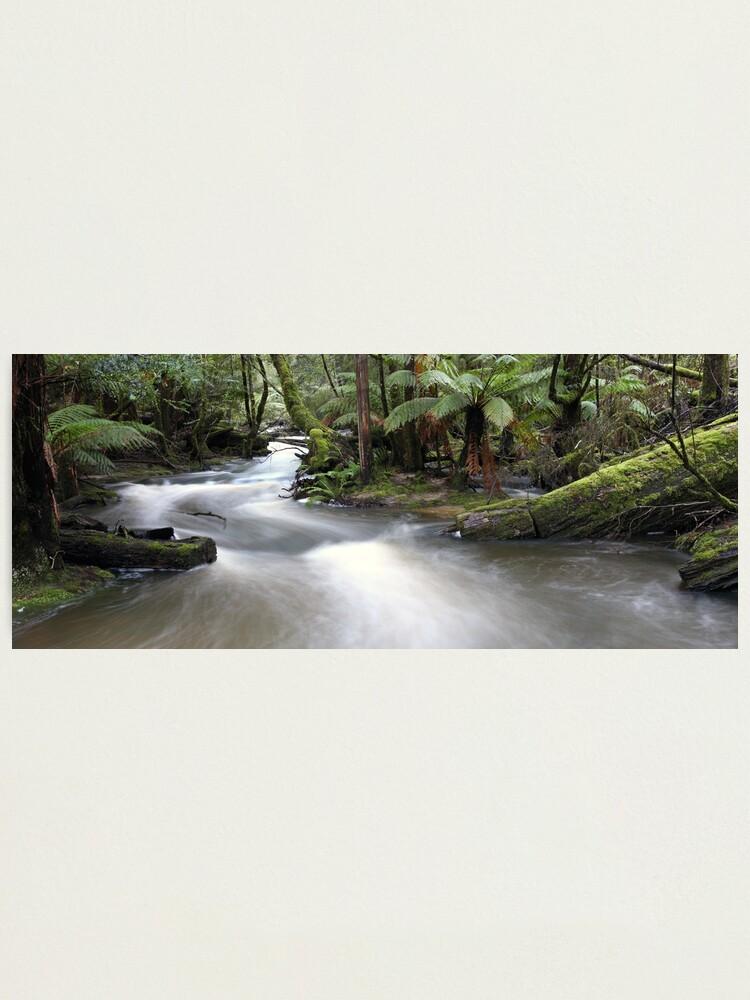 Alternate view of Russell Creek, Tasmania, Australia Photographic Print