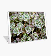 Tiny Succulents Laptop Skin
