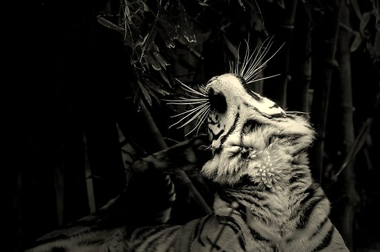~The Cat's Whiskers~ by a~m .