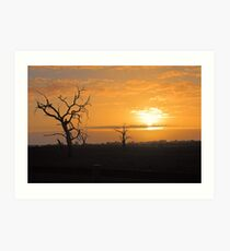 Farm Trees At Sunset  Art Print
