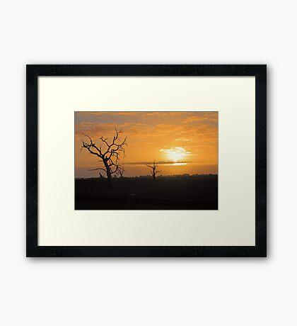 Farm Trees At Sunset  Framed Print