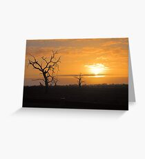 Farm Trees At Sunset  Greeting Card