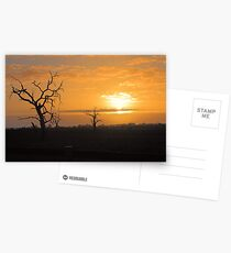 Farm Trees At Sunset  Postcards