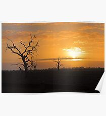 Farm Trees At Sunset  Poster