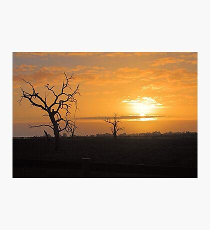 Farm Trees At Sunset  Photographic Print