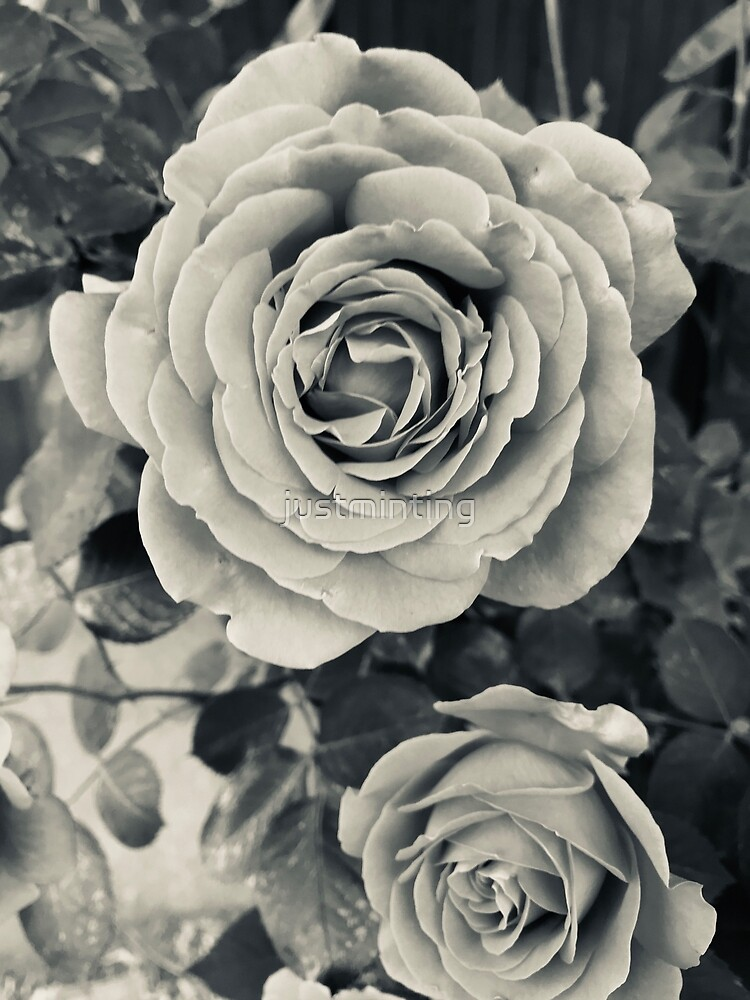 Noir Roses by justminting