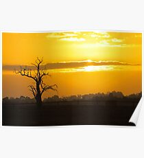 Farm Tree At Sunset  Poster