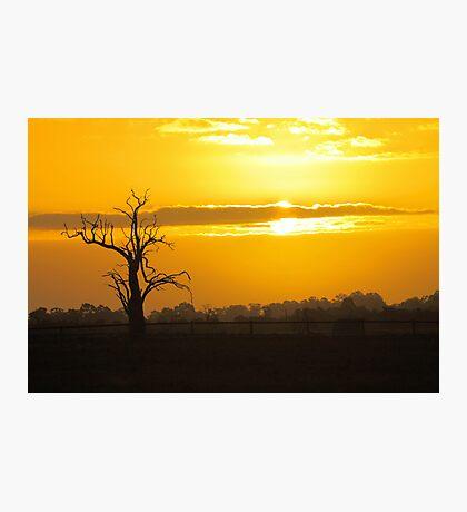 Farm Tree At Sunset  Photographic Print
